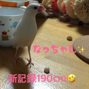 なっちゃん!お魚で190cm(#^.^#)