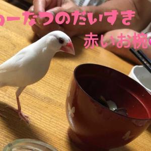 「コラ~!」2連発…<(`^´)>