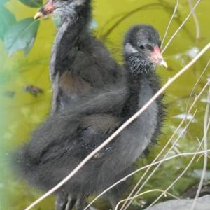 我らの季節~別所沼の留鳥たち~