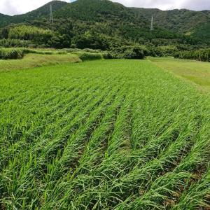 稲に農薬散布&釣り講習