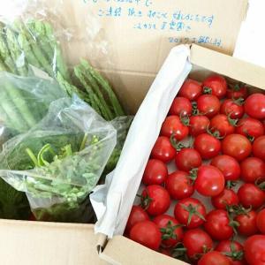 【ゴヒイキ】お気に入りの農家と直接やり取り!新鮮な朝摘み野菜が届きました♪