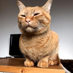 飼い主の家事チェックをする猫