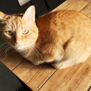 落とし穴を見つめる猫