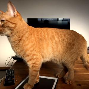 何でもかんでも踏み付ける猫