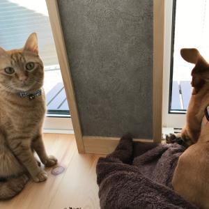 犬と猫のこたつ争奪戦