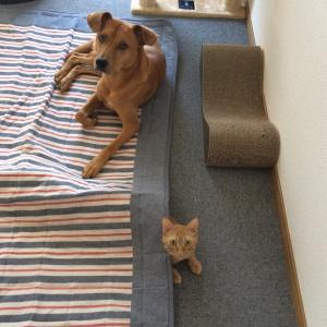 ビビリな元保護犬とやんちゃな元保護猫の関係性