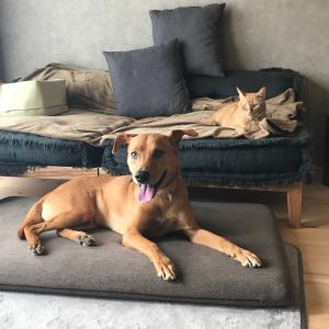 シンクロする犬と猫