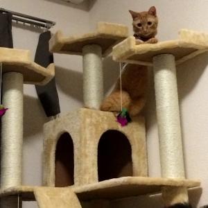 猫の分離不安はいつ頃治る?解決策はある?