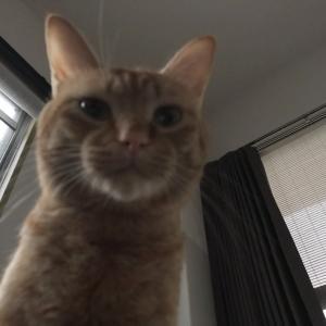 飼い主のお腹の上で笑う猫?