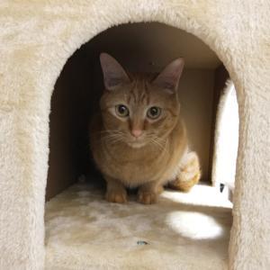 キャットタワーに引きこもる猫