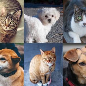 【2019年鹿児島】犬猫里親募集・譲渡会イベント一覧 一匹でも多くの命を救って大切な家族に!