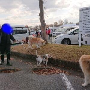 秋田犬本部展 in 埼玉県に行って来ました