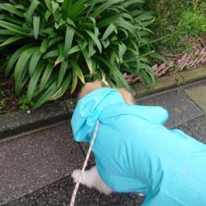 散歩は雨の止み間に…