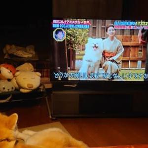 テレビに見入る