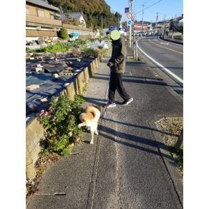岐阜県美濃市のうだつの町並みを見に行こう。