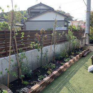 1ヶ月後の花壇