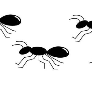 アリの大量発生!