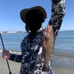 いつもの浜で高級魚が