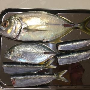 ルアーで初めて釣った魚