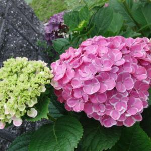 ピンクの花柄絽の小紋で夏着物コーデ♪