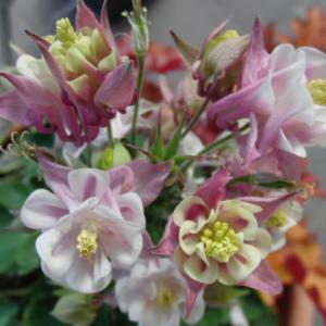 箸休めに庭のお花たち♪そして、、