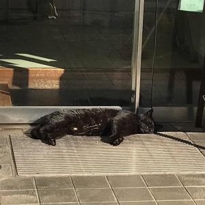 #朝帰り?#黒猫#酔いつぶれ (Instagram)