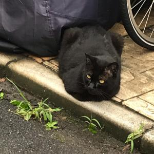 #今日の黒猫 (Instagram)