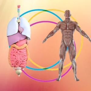 多くの心身の不調は内臓の不調からきている?