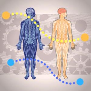 頭~首~腰の中枢部の痛みと脳脊髄液循環不全