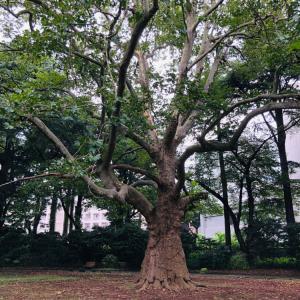 秋のお散歩会&お茶会開催in新宿御苑