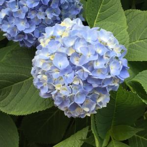 初夏の新宿御苑