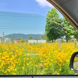 一年前の黄色い花