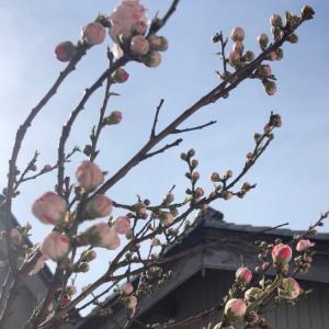 桃の花が語ること