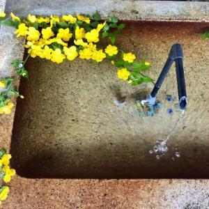 愛犬とお花見