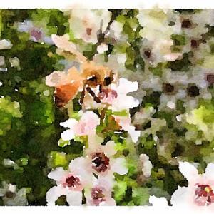 健康にいいけど食べにくいという【マヌカハニー】山田養蜂場のは美味しい!