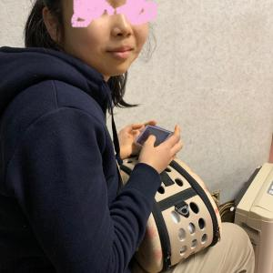 2019/12/12   三者面談と動物病院