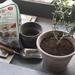 植物の植え替えとベランダハーブ菜園