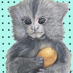 Animal    ピグミーマーモセット
