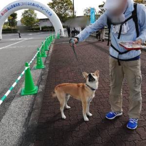 吉備高原ふれあいロードレース
