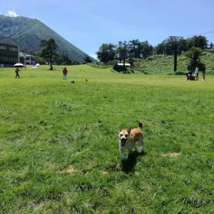鳥取大山豪円山のドッグラン