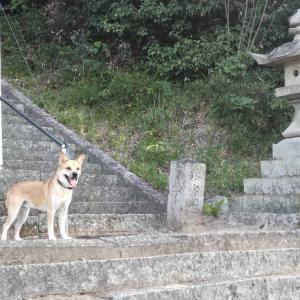 階段の段階