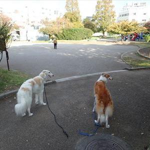 これからが、今日の散歩だよ♪