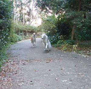 朝の早渕公園で遊びました