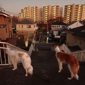 散歩をするなら黄昏時がお勧め