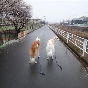バカに飼われている犬は不幸