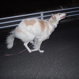 バカに飼われている犬は、幸せ