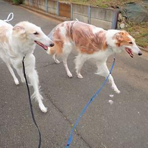 犬との散歩は楽しいですよ~♪