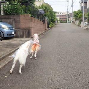 公道でリードを手放すと猫に…