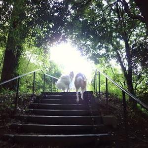 朝の早渕公園内を徘徊しました