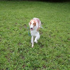 今朝は茅ヶ崎公園で遊びました